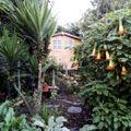 Acacia tree house